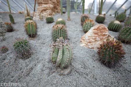 Foto a video: V Bojniciach otvorili novú unikátnu atrakciu Botany Park Bojnice (kaktusárium) 75
