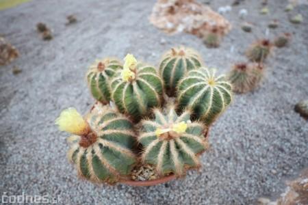 Foto a video: V Bojniciach otvorili novú unikátnu atrakciu Botany Park Bojnice (kaktusárium) 81