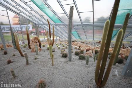 Foto a video: V Bojniciach otvorili novú unikátnu atrakciu Botany Park Bojnice (kaktusárium) 85