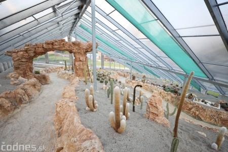 Foto a video: V Bojniciach otvorili novú unikátnu atrakciu Botany Park Bojnice (kaktusárium) 88