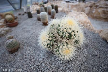 Foto a video: V Bojniciach otvorili novú unikátnu atrakciu Botany Park Bojnice (kaktusárium) 91