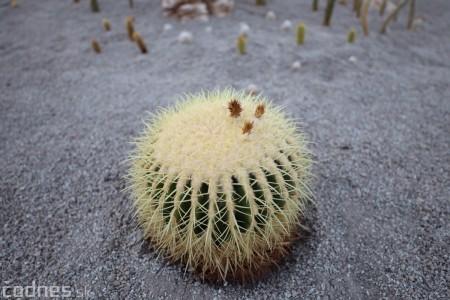 Foto a video: V Bojniciach otvorili novú unikátnu atrakciu Botany Park Bojnice (kaktusárium) 93
