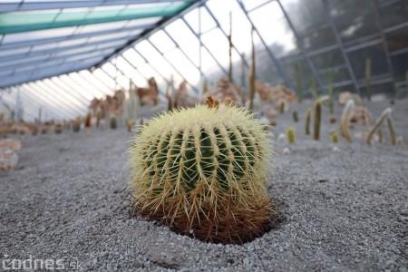 Foto a video: V Bojniciach otvorili novú unikátnu atrakciu Botany Park Bojnice (kaktusárium) 94