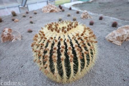 Foto a video: V Bojniciach otvorili novú unikátnu atrakciu Botany Park Bojnice (kaktusárium) 96
