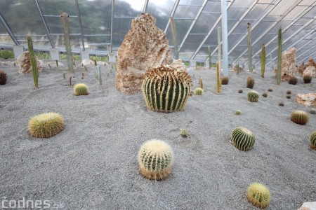 Foto a video: V Bojniciach otvorili novú unikátnu atrakciu Botany Park Bojnice (kaktusárium) 97