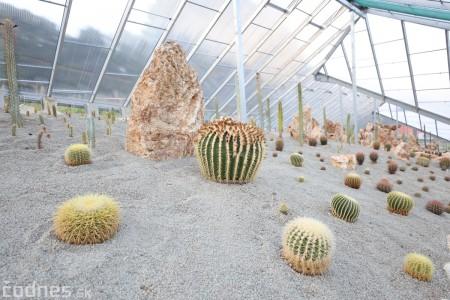 Foto a video: V Bojniciach otvorili novú unikátnu atrakciu Botany Park Bojnice (kaktusárium) 99