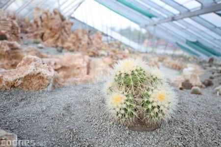 Foto a video: V Bojniciach otvorili novú unikátnu atrakciu Botany Park Bojnice (kaktusárium) 102