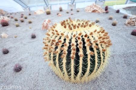 Foto a video: V Bojniciach otvorili novú unikátnu atrakciu Botany Park Bojnice (kaktusárium) 103